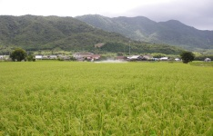 夏・水田風景の写真